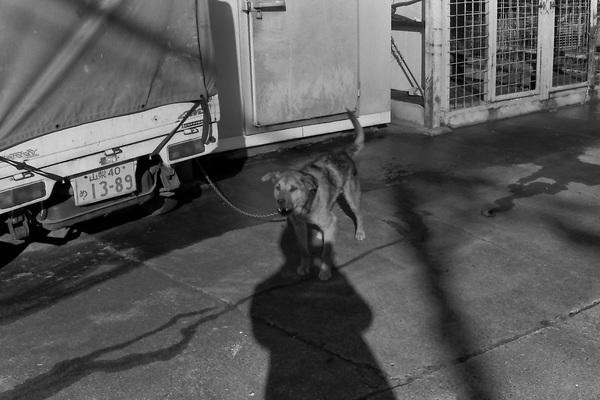 山中湖犬.jpg